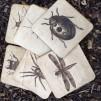 Wooden Bug Coasters